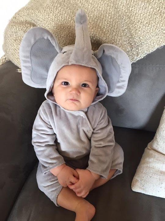 47_babyelephant